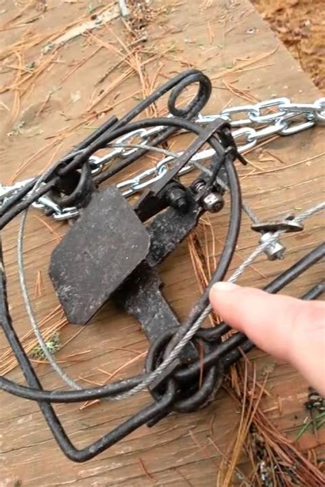 Trapping 101-3: Belisle foot snare fox coyote trap 68