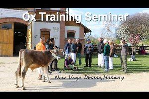 ISKCON News: Ox Training Seminar, New Vraja Dhama Hungary